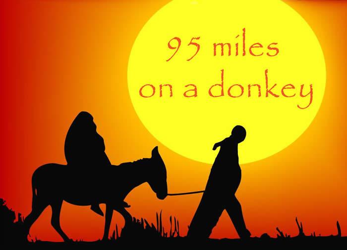 donkey_000