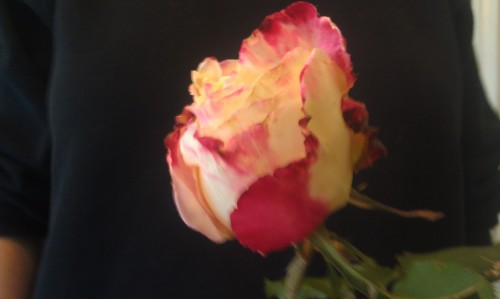 heavy rose 2