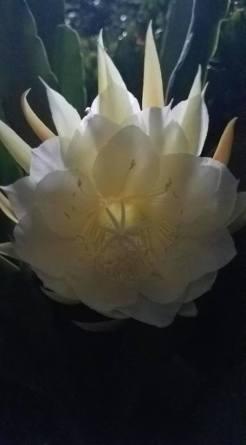In the dark she blooms