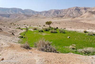 Judean-wilderness-with-grass-tb021107531-bibleplaces